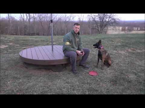 Malinois Playing Fetch. Fetch Games With Your Dog. Alternative Ideas To the Basic Fetch Game