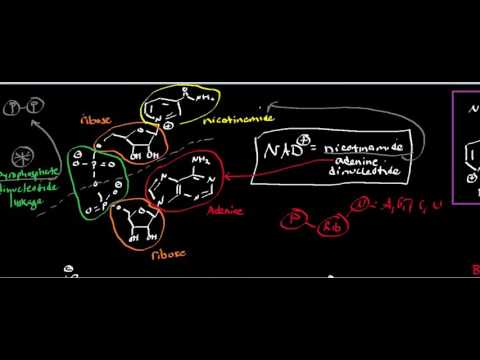 nad:-structure-and-reduction-of-nad-to-nadh