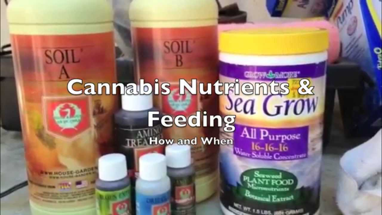 Cannabis Nutrients and Feeding with House and Garden YouTube