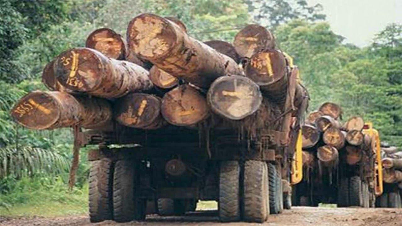 Talar árboles es nefasto para el clima