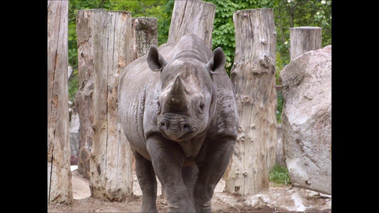 wat kan je zien in dierentuin blijdorp rotterdam