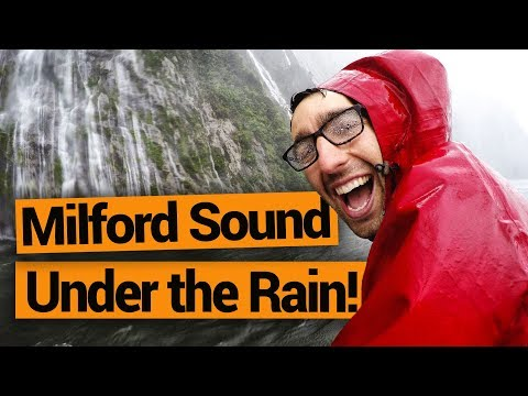 What it's Really Like to Do a Milford Sound Cruise Under the Rain –  New Zealand's Biggest Gap Year