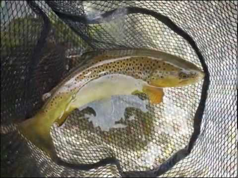 Fly Fishing in Western New York-Spring 2015