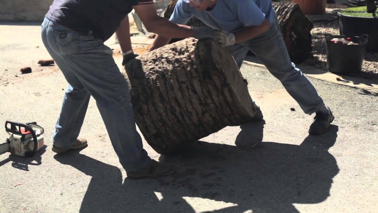 Cómo hacer un macetero con el tronco de una palmera- Sol de Invierno ...
