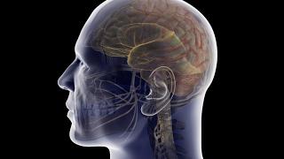 26. Развитие памяти. Как запомнить выступление и речь слово в слово?