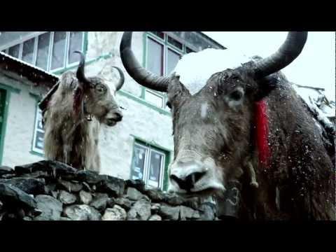 "Dhani Tackles the Globe ""Trailer"""