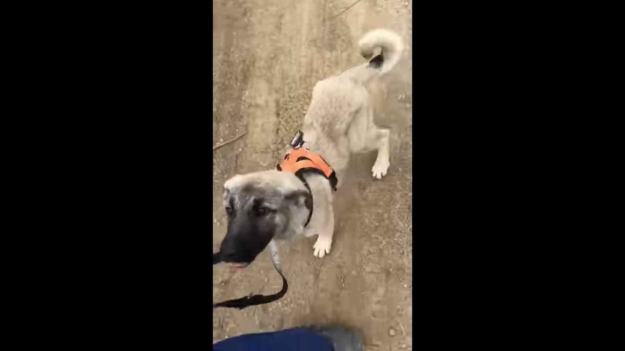 Video Hunde