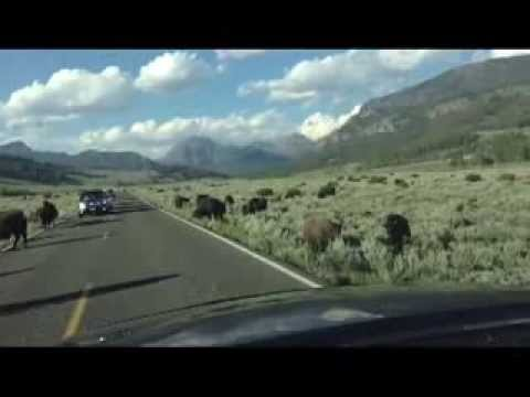 7 Days Holiday in Yellowstone National Park  Day 7!