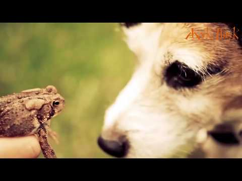 Наркотик «Крокодил» (жуткие видео)