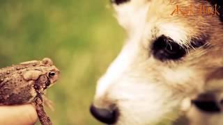 6 ЖИВОТНЫХ ПЬЯНИЦ.И НАРКОМАНОВ. Пьяные животные.(И в животном мире есть любители бухнуть. ▻Смотрите также: 1. УДИВИТЕЛЬНЫЕ И НЕОБЫЧНЫЕ ПАУКИ - https://youtu.be/smal1Iv21..., 2016-08-19T14:12:50.000Z)