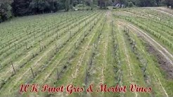 Wild Rose Vineyard - Southern Oregon Wine - Tours and Wineclub