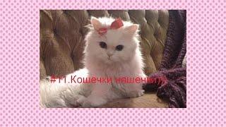 #11.Игры про котят.Самые милые котята няф =3