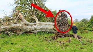 видео Дерево и современность