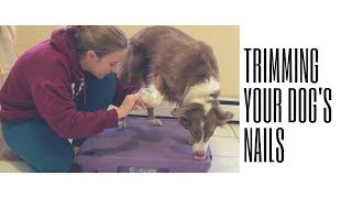 Trimming your dog's nails - Force Free