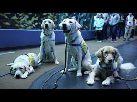 'Puppy Love' From Aquarium Love Stories