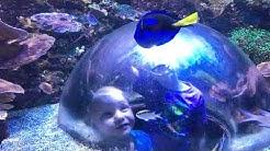 SeaLife Aquarium in Tempe, AZ