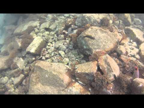 Test Podvodne Video Cislo 1.