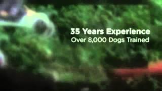 Service Dog Training Orange County