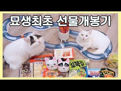 묘생최초 선물개봉기! 쵸꼬비 고양이가 받은 첫 선물