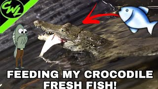 FEEDING MY CROCODILES FRESH FISH!!!