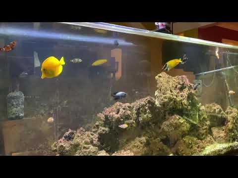 Salt Water Fish: Grazing Algae