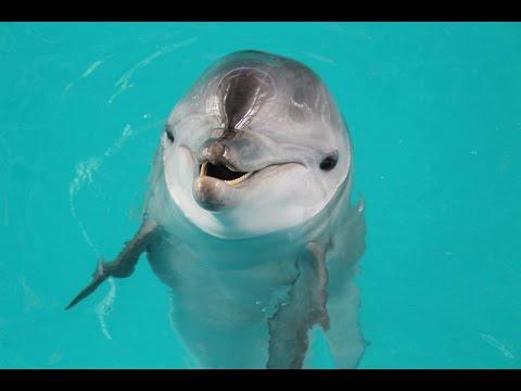 Как дрессируют дельфинов