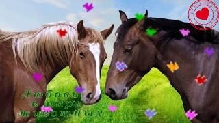 Любовь в мире животных. Животные любят ласки, поцелуи и обнимашки.