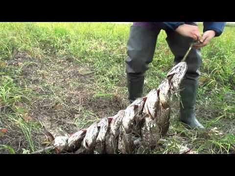 ловля рыбы на удочку в болоте видео