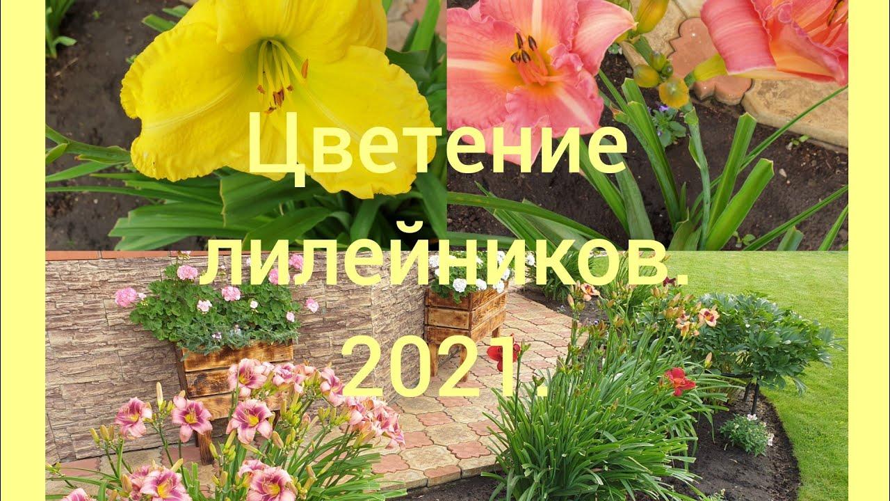 🌺🌸🌺Цветение лилейников в нашем саду. 2021.