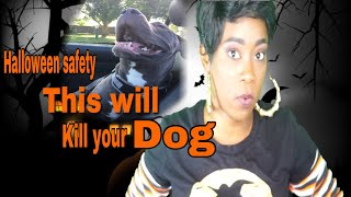 Things you may not kHalloween safety| Things that will a dog| Meet my new dog