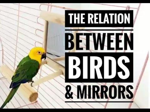 The Relation Between Birds & Mirrors
