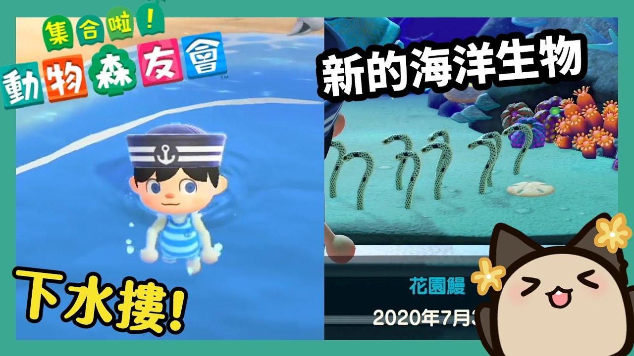 【集合啦!動物森友會/動物之森】7月3日更新潛水系統!開放下海游泳!新的潛水衣~新的海洋生物圖鑑來收集!