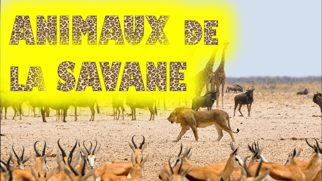 Animaux de la savane africaine et leurs cris youtube - Animaux savane africaine ...