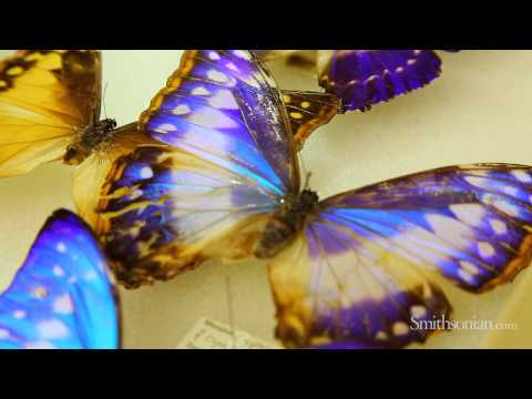 Biomimicry and Butterflies: How Nature is Inspiring Design and Innovation