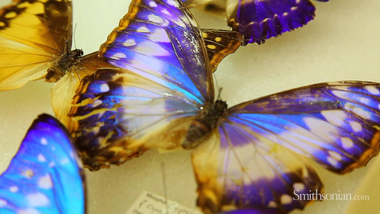 Biomimicry and Butterflies: How Nature is Inspiring Design