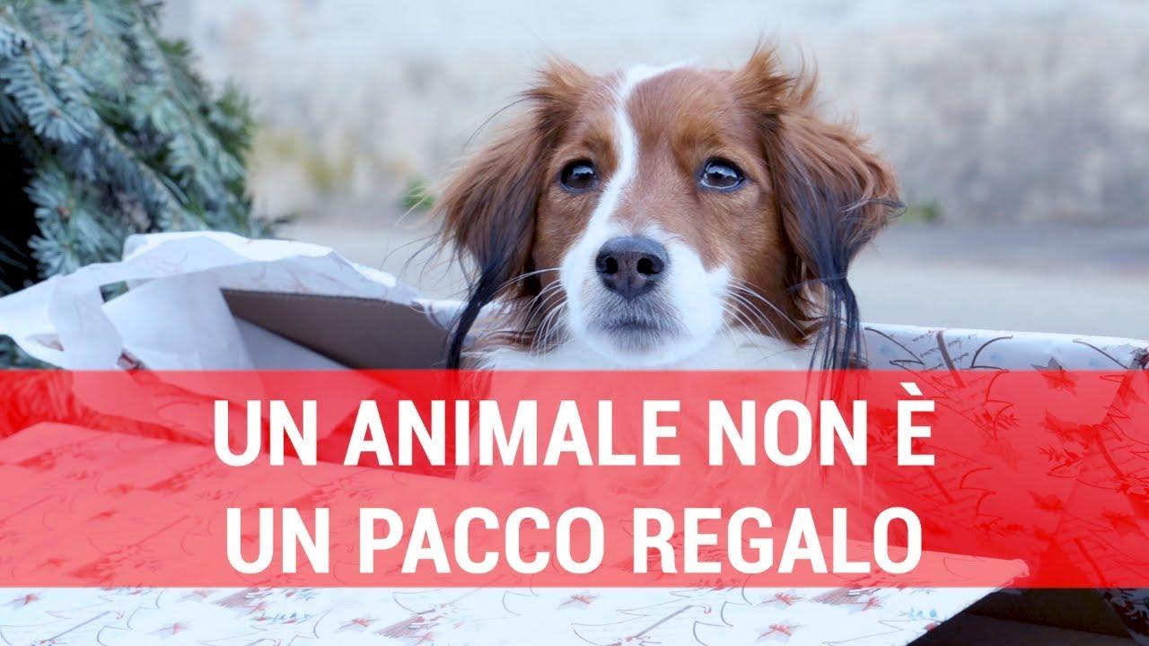 Detenzione Di Animali Da Compagnia E Animali Selvatici