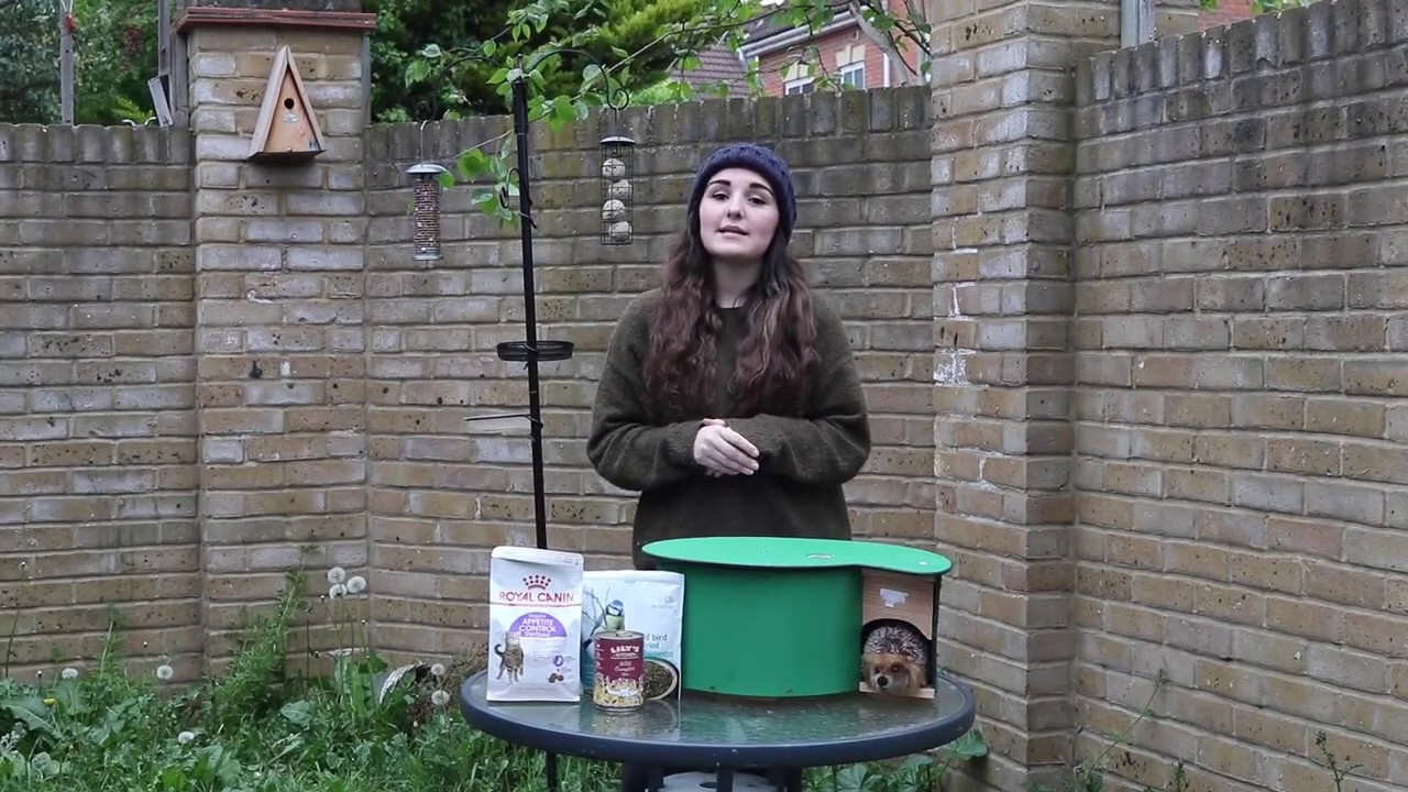 how to attract hedgehogs to your garden youtube