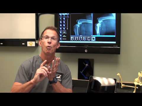 Canine ACL Tears and TPLO Surgery discussed by Dr. Bauer, DVM, DACVS