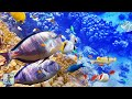 Capture de la vidéo 3 Hours Of Beautiful Coral Reef Fish, Relaxing Ocean Fish & The Best Relax Music 1080P Hd