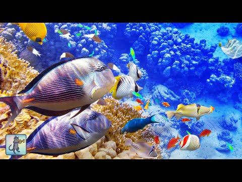 Peaceful Coral Reef Fish & The Most Relaxing Aquarium Music