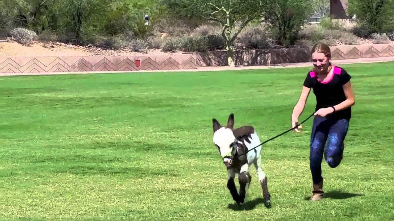 Cute Baby Donkey Pet Videos Animals Doing Things