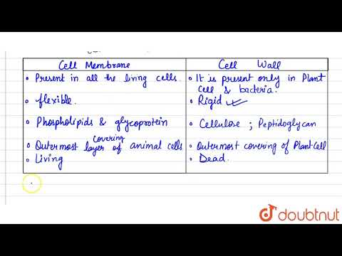 List 4 Functions Of The Cell Or Plasma Membrane