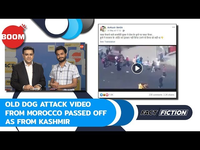 Fact Vs Fiction: Old Dog Attack Video From Morocco Passed Off As From Kashmir