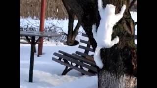 чем заняться зимой Cмотреть видео про домашнее животное Приколы про котов