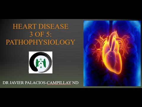 Heart Disease: Pathophysiology | Naturopathic Medicine | The Zen Palace of Healing