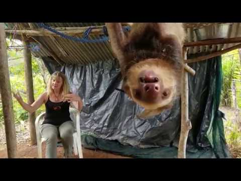 A stressed sloth shares his explosive story with Anna Twinney (animal communicator)