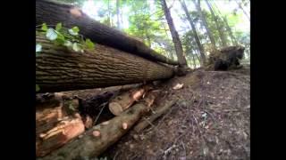 Crossing Timber Bridge