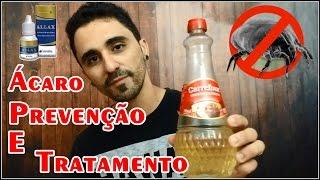ÁCAROS #PREVENÇÃO E TRATAMENTO!!!