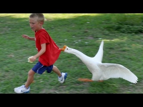 Thumbnail: Animals never fail to make us laugh - Super funny animal compilation