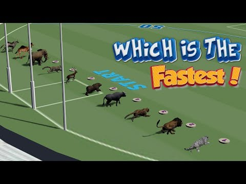 Which Is The Fastest Animal?